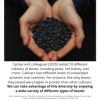 Legume Science Post #7 Feb-17-2021 - Differences Among Bean Cultivars