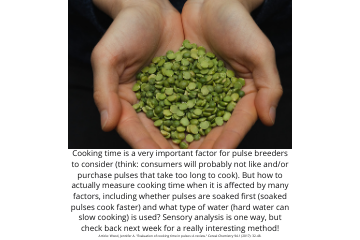 Legume Science Post #10 Mar-9-2021 - Pulse Cooking Time